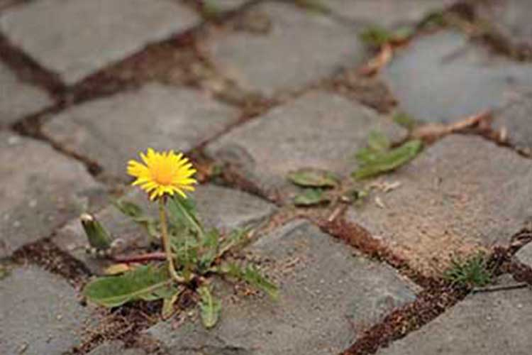 How to get rid of weeds in block paving