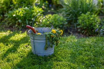 How to remove weeds from a lawn