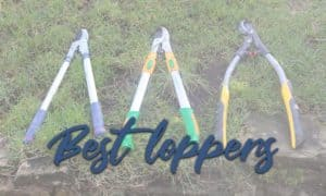 The Best Loppers Tested