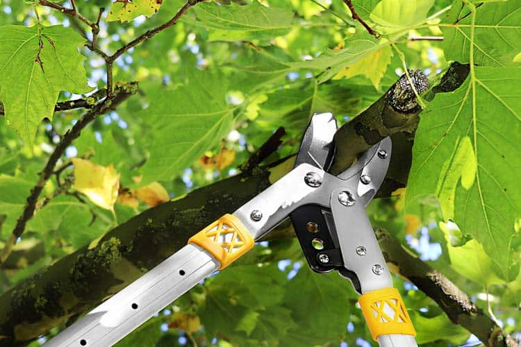 gruntek anvil lopper chopping branch