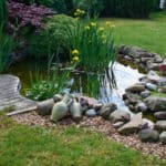 image of pond for best pond pumps article