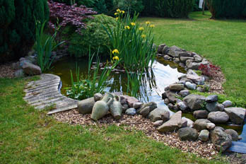 image of pond for best pond pumps article