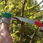 image of man pruning tree using a pruning saw