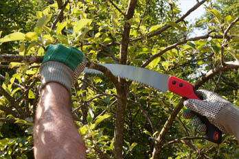 image of man pruning tree using a pruning saw