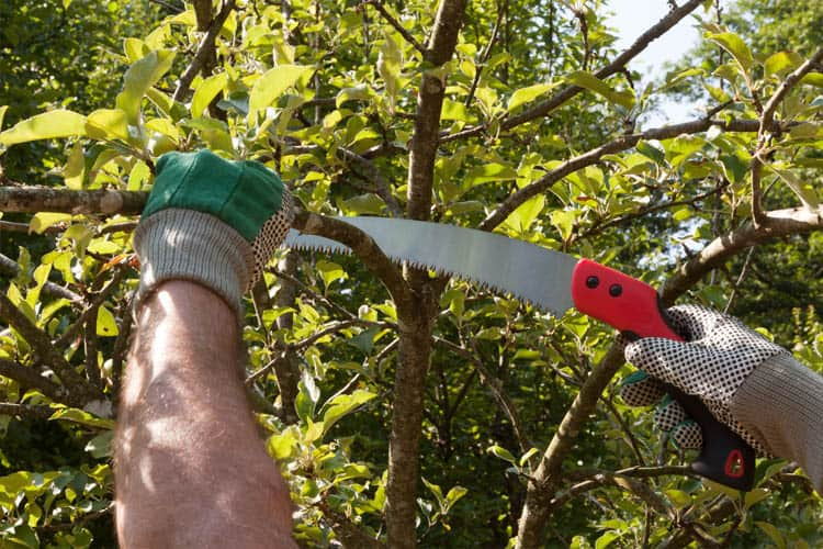 image of a man sawing a branch using a pruning saw