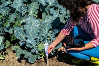 Best Soil Testing Kit