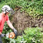 Best Professional Petrol hedge Trimmers Featured