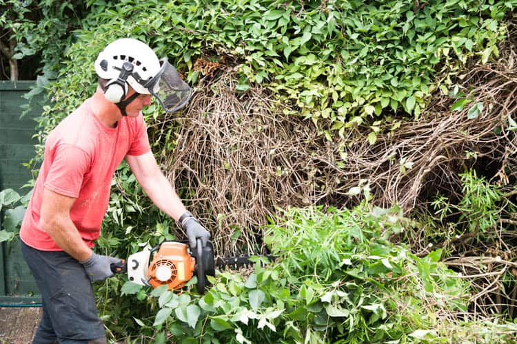 Best Professional Petrol hedge Trimmers