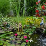 image of beautiful pond