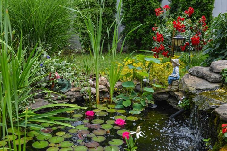 pond plants around pond