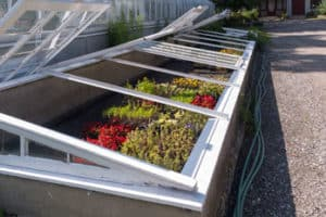 the best cold frames