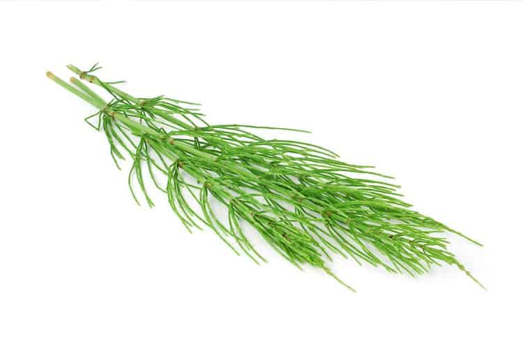 Killing Horsetail With Fire In Article