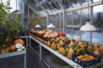 What to grow in a greenhouse in winter featured