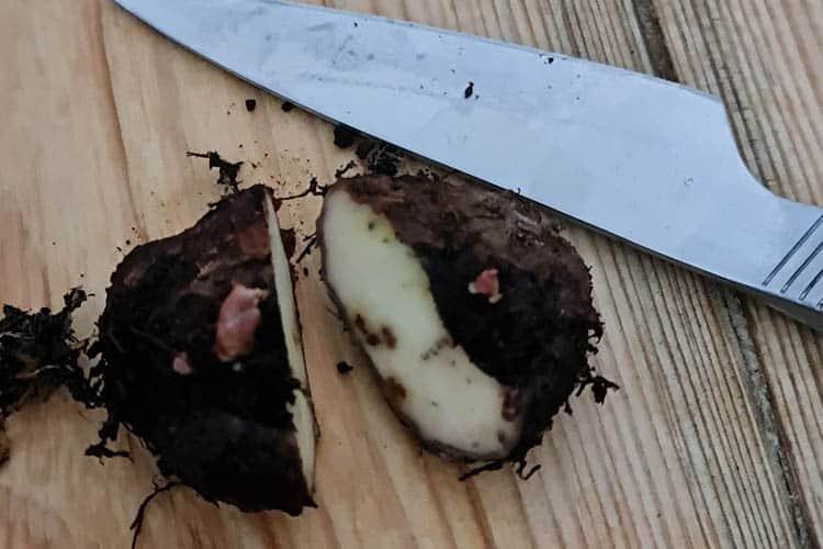tuber cut in half